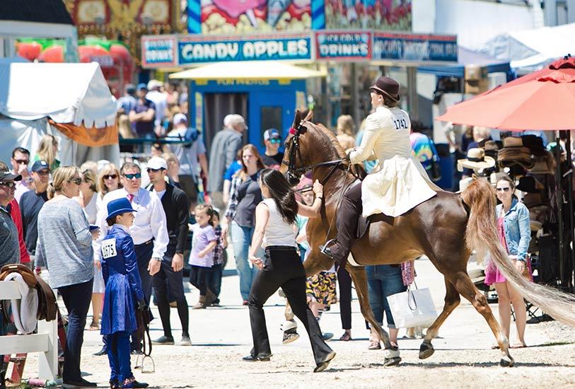 the-devon-horse-show-country-fair
